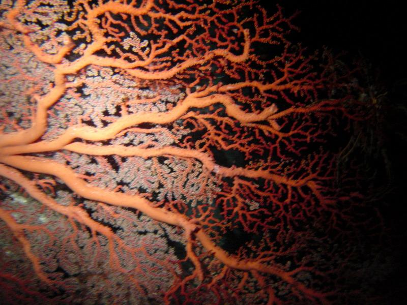 南沙群岛 - 南沙群岛海域的珊瑚礁14