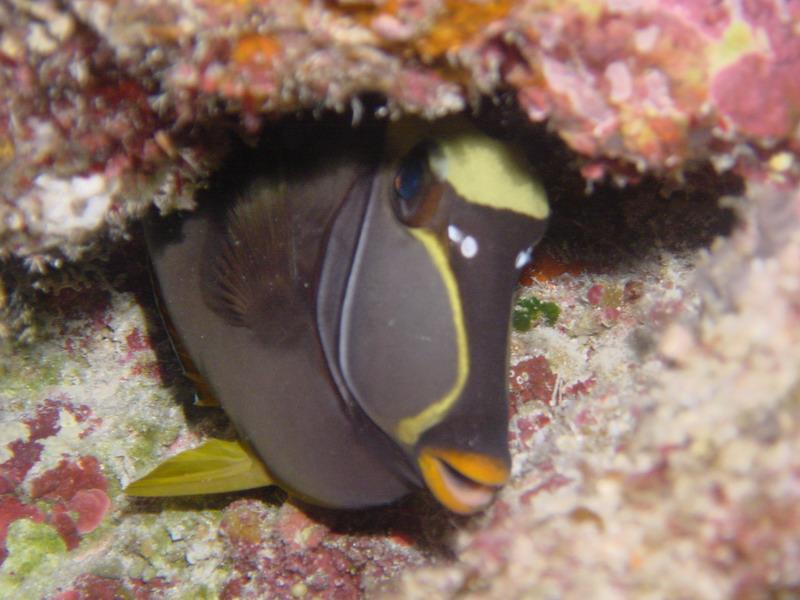 1: 南沙群岛海域的珊瑚礁1  2: 南沙群岛海域的珊瑚礁2  3: 南沙群岛海域的珊瑚礁3  4: 南沙群岛海域的珊瑚礁4  5: 南沙群岛海域的珊瑚礁5  6: 南沙群岛海域的珊瑚礁6  7: 南沙群岛海域的珊瑚礁7  8: 南沙群岛海域的珊瑚礁8  9: 南沙群岛海域的珊瑚礁9  10: 南沙群岛海域的珊瑚礁10  11: 南沙群岛海域的珊瑚礁11  12: 南沙群岛海域的珊瑚礁12  13: 南沙群岛海域的珊瑚礁13  14: 南沙群岛海域的珊瑚礁14  15: 南沙群岛海域的珊瑚礁15  16